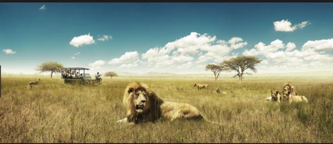 African safari holiday